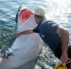 haaienfluisteraar