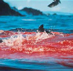 Bloederige rode oceaan