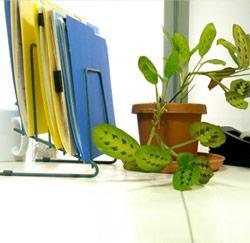 bureau met plant