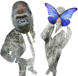aap vs. vlinder (jvc)