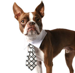hond businessvrouw