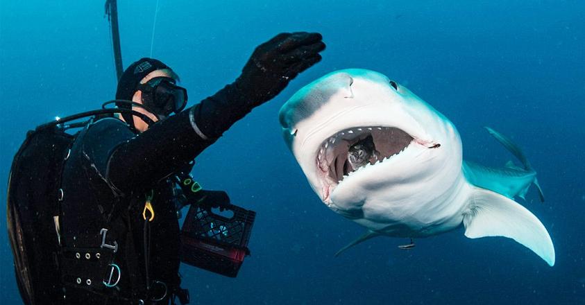 haaienverzorger