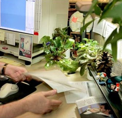 plant bureau