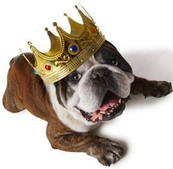rijke hond