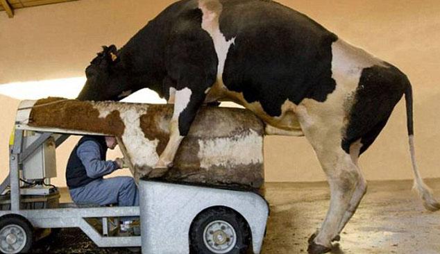 Bestuurder mechanische koe