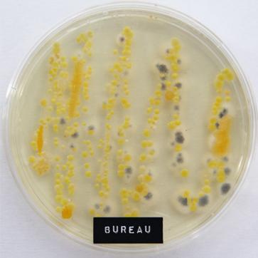 Bureau microben