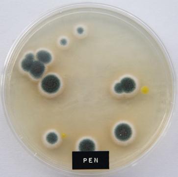 Pen microben